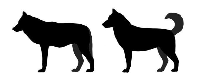 How To Draw A Dog Details Make The Difference With Images Dog
