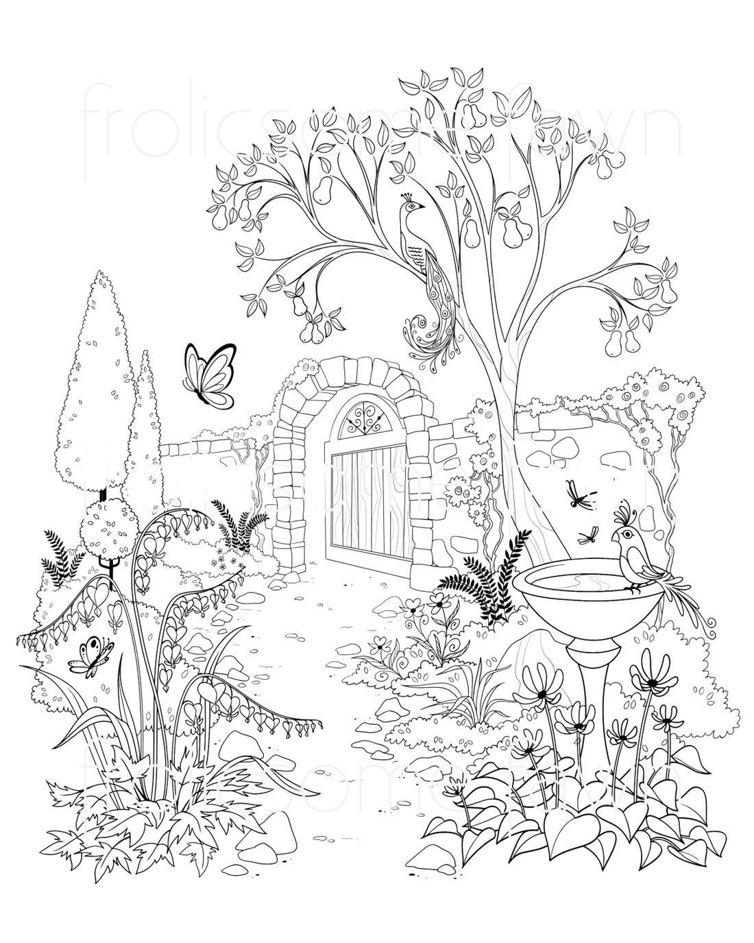 Раскраски павлин сидит на дереве в саду   Раскраски ...
