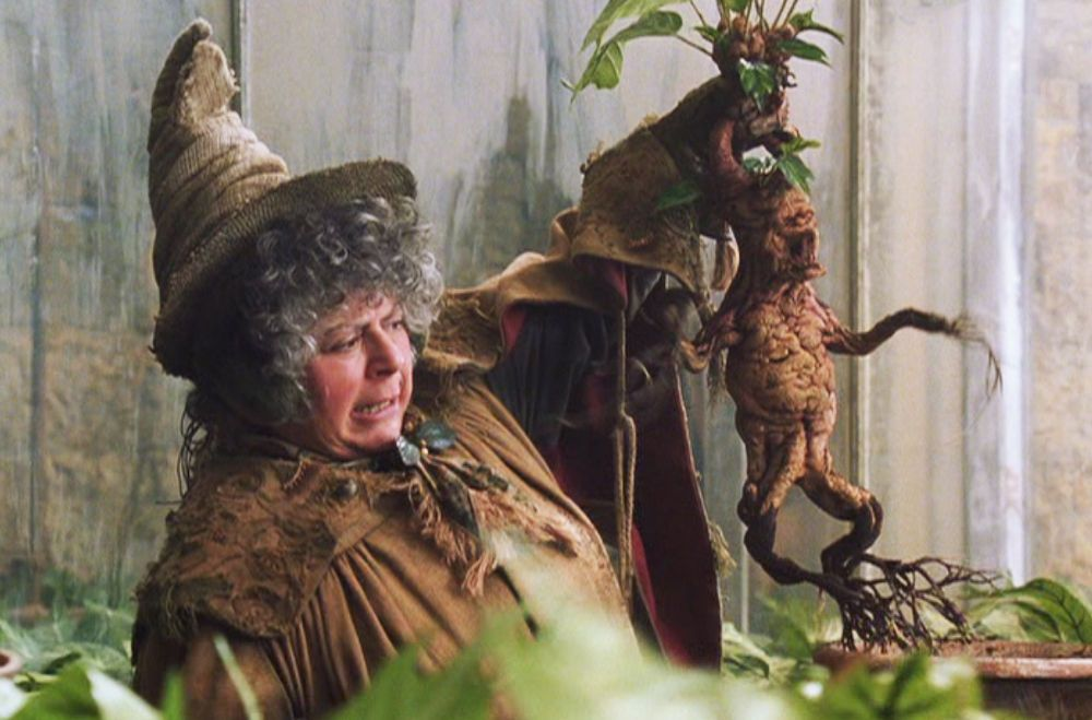harry potter mandrake craft this is a halloween decoration