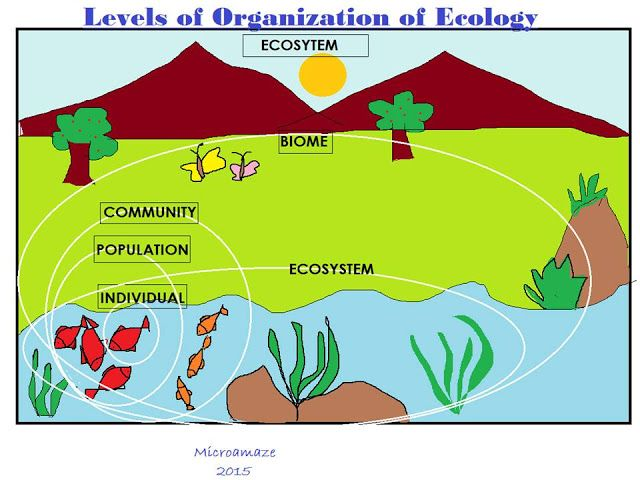 essay questions on ecosystems Free ecosystems papers  but there are still questions about how significant of a role they play and how manipulating management plans  in this essay,.