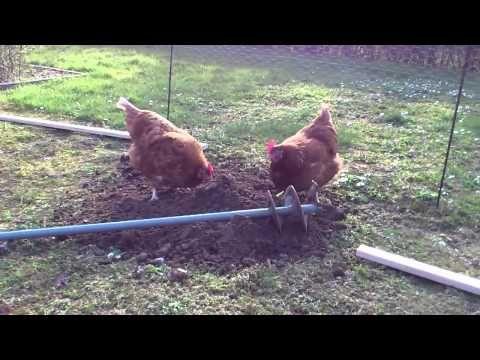 ▶ Pigerne hjælper med at bygge hønsegård - YouTube