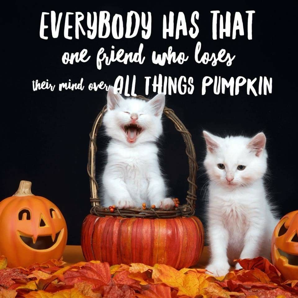 Pin by Tanya McDowell on Autumn is Awesome! Funny