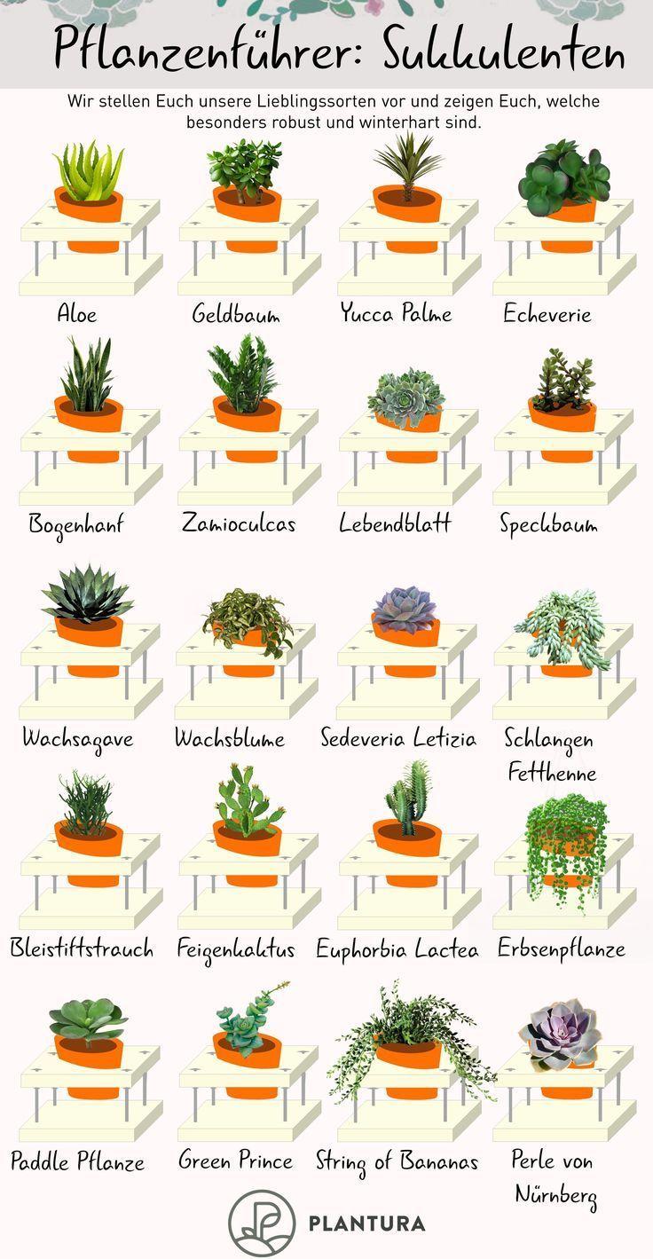 Sukkulentenarten: Die 10 schönsten & winterharten – Plantura