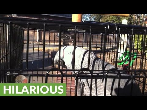Einstein the Parrot and his owner have a chat outside http://j.mp/2rdk871