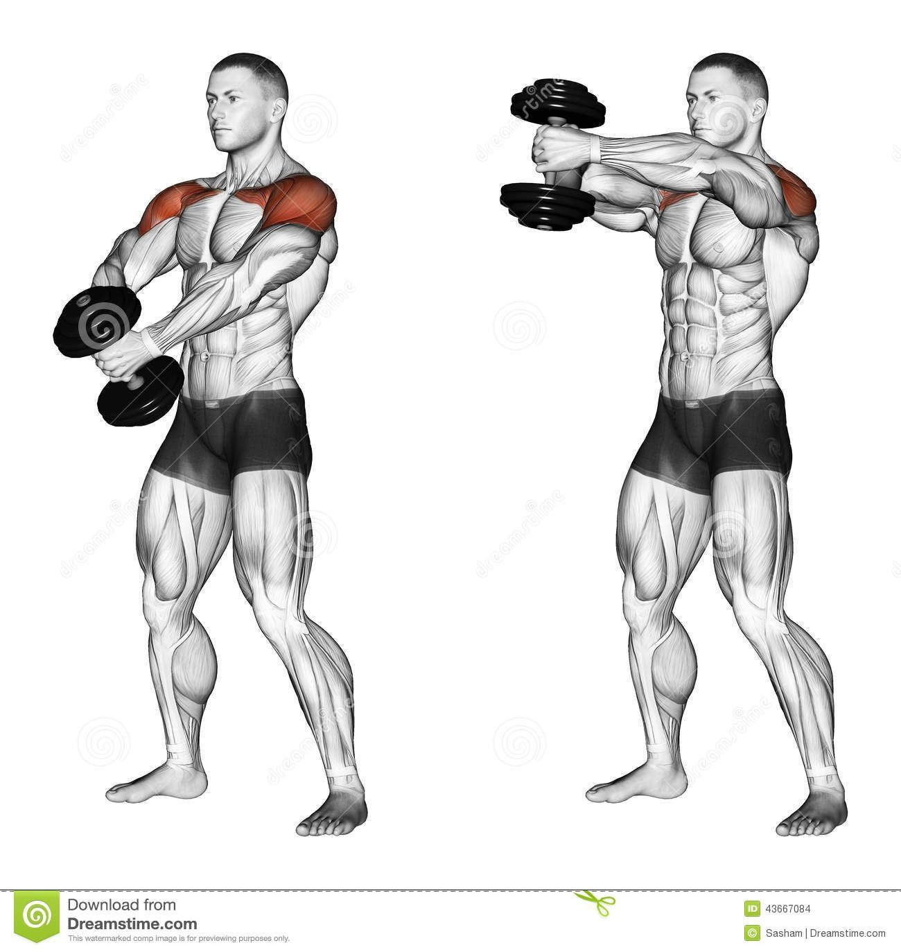 Photo about Ups of hands forward with one dumbbell. Exercising for bodybuilding. Target muscles are marked in red. Initial and final steps. Illustration of forward, marked, clavicular - 43667084 #dumbbellexercises