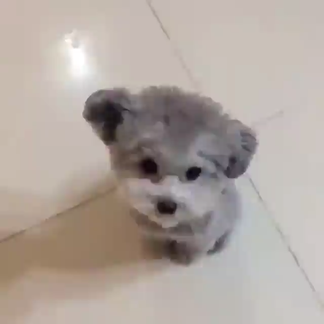 Photo of video adorable