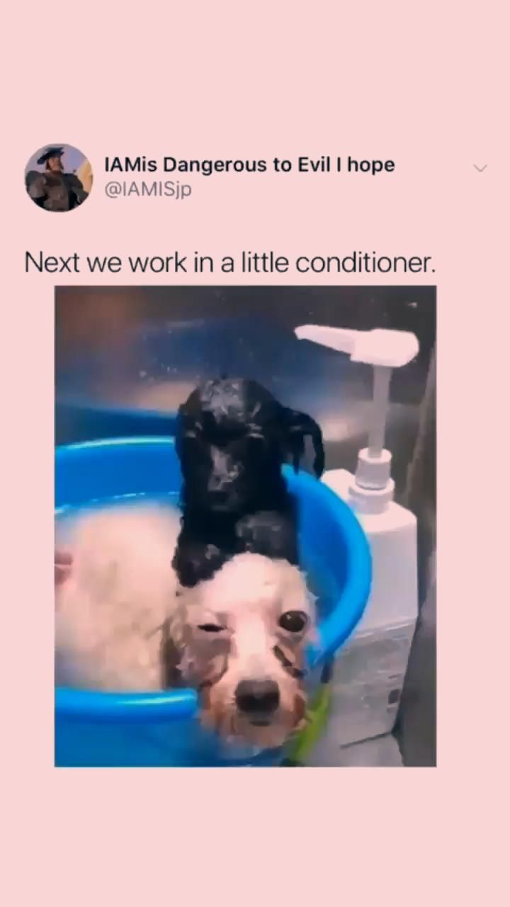 funny dogs with captions | funny dogs memes | funny dogs hilarious | funny dogs humor | cute funny dogs | funny dogs lol  #dogs #dogs_of_world  #dog