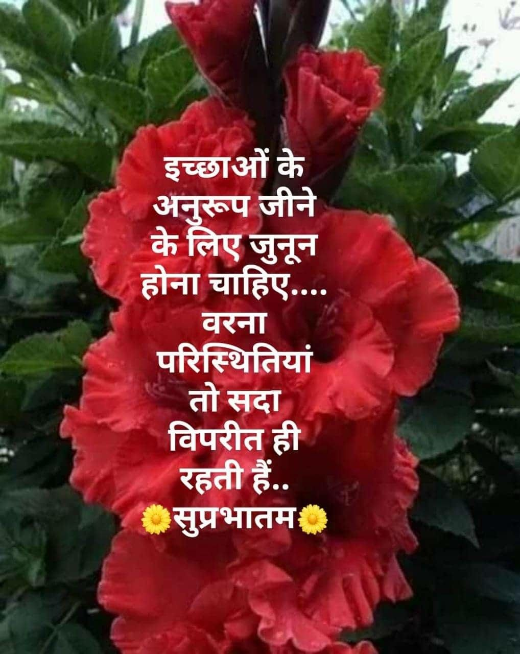Pin By Ameer Afzaly On म क ष म र ग Hindi Good Morning Quotes Good Morning Images Good Morning Messages