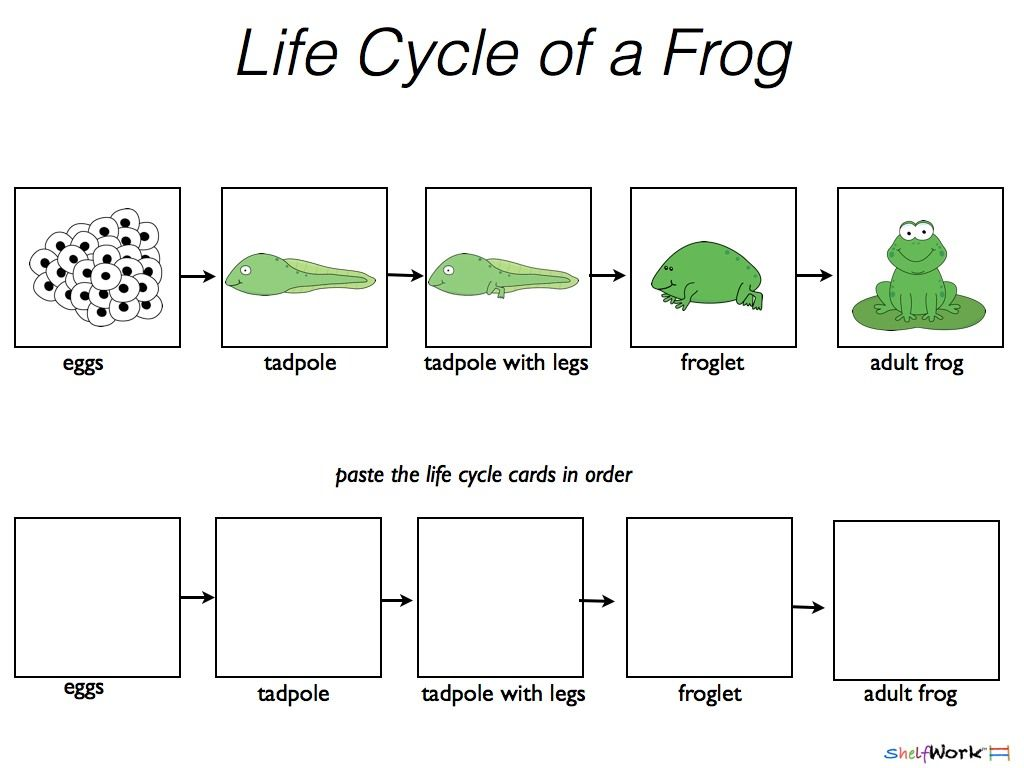 Life Cycle Sequencing