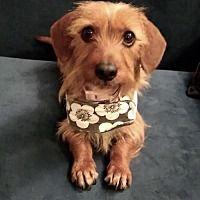 Dachshund Rescue of Los Angeles in Los Angeles, California