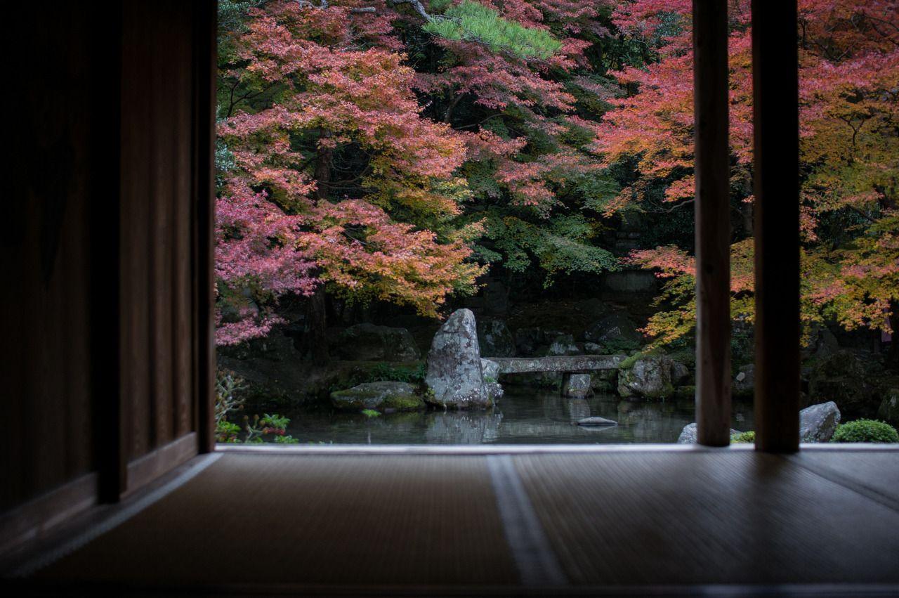 月夜の夢 : Photo