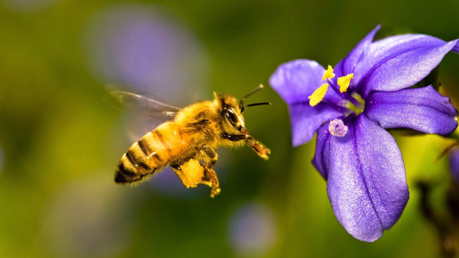 La Familia de la Apicultura - The Beekeeping of Family: Fotos de abejas - Photos of bees.
