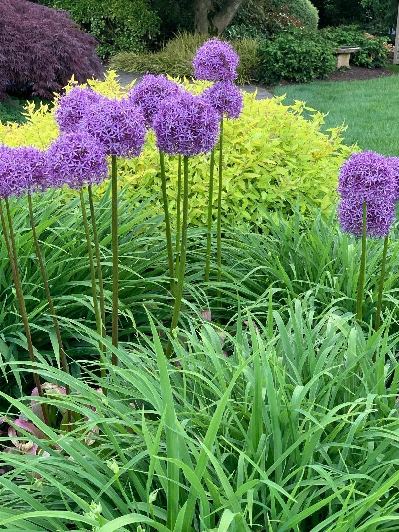 12f44745740f52bf82047bd34e00f15c - What Zone Is Long Island For Gardening