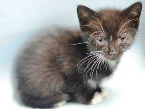4 Week Old Kitten Has A Uri And Conjunctivitis And Needs Foster Cats Animals Kittens