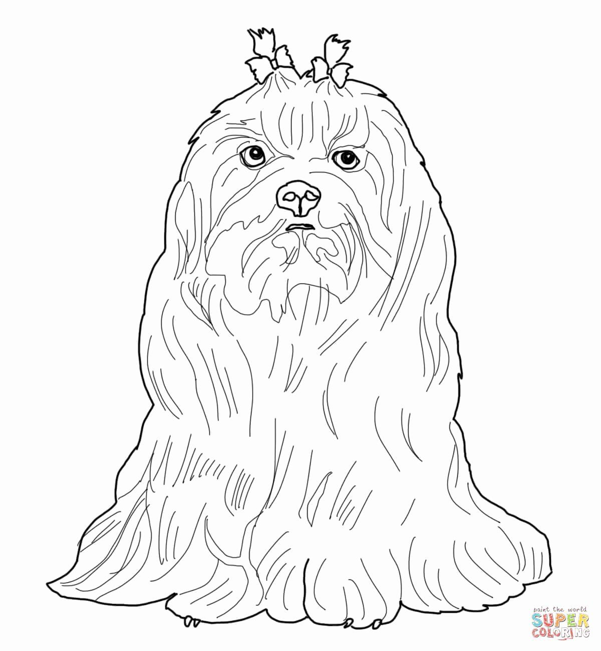Shih Tzu Coloring Page Best Of Yorkie Shih Tzu Coloring Pages