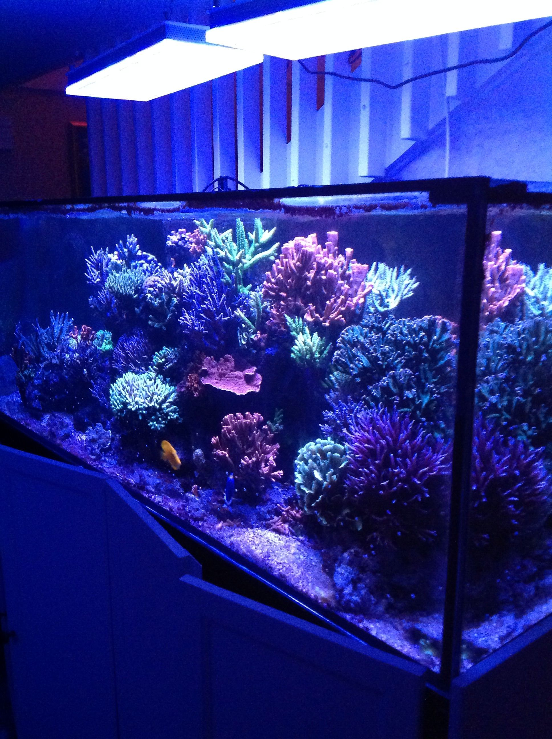 Customer in Sweden Shows Off His Atlantik V2B Dual Diode Pendants Fredrik has graciously shared some photos with us of his marvelous looking reef tank. You can see what the Atlantiks did for Fredrik's tank and they can do the same for your reef as well.