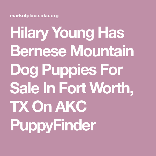 Hilary Young Has Bernese Mountain Dog Puppies For Sale In