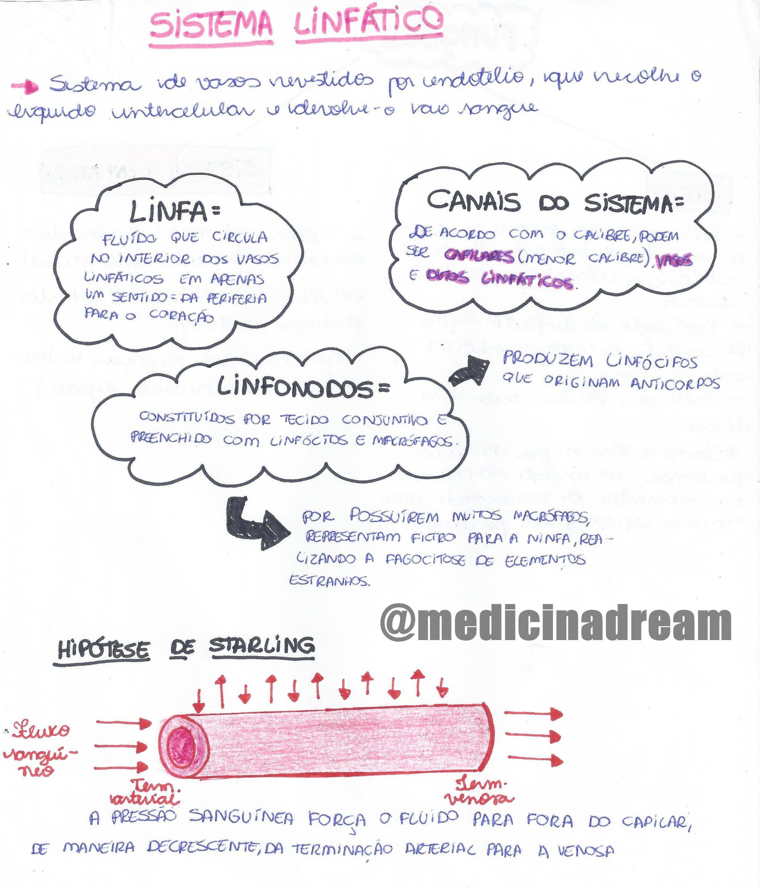 Sistema Linfático | medicina | Pinterest | Sistema linfático ...