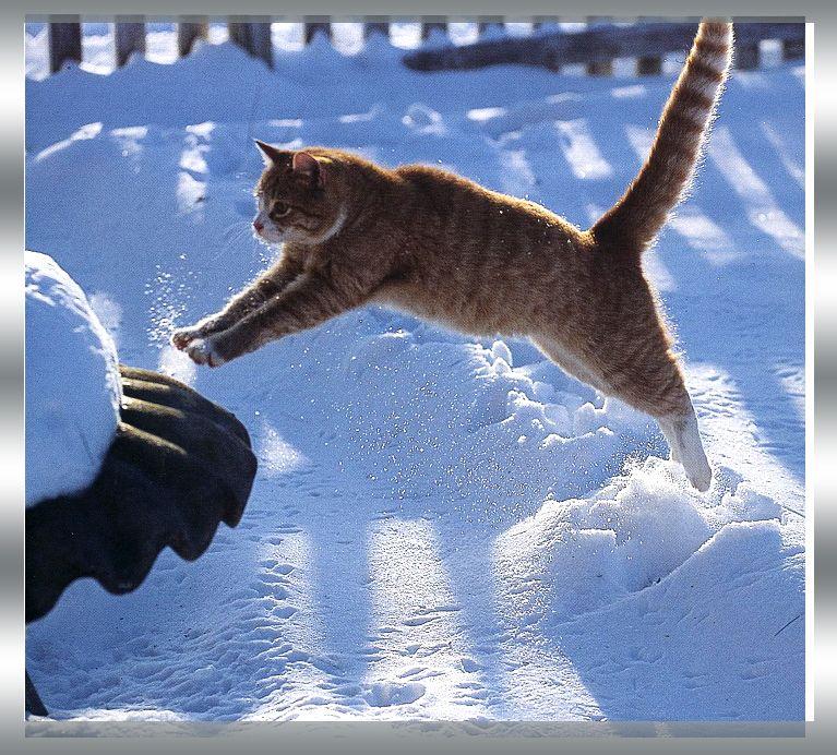 Kitteh avoiding the freezing toes effect of snow.