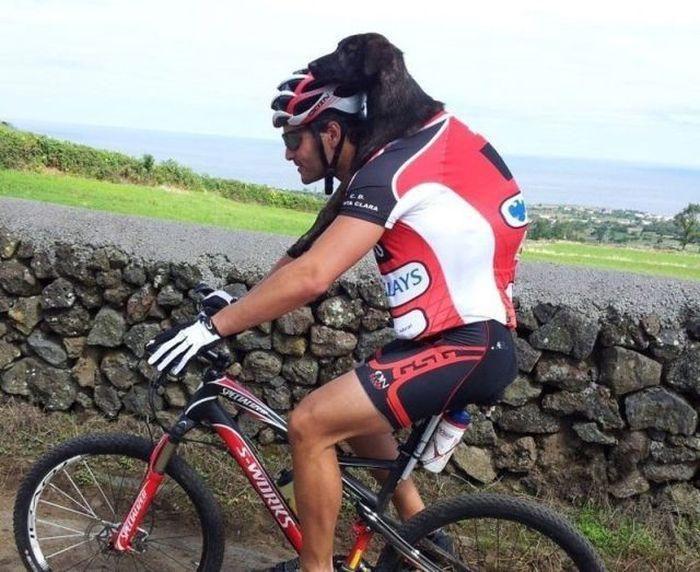 Открытки бабушке, езда на велосипеде смешные картинки