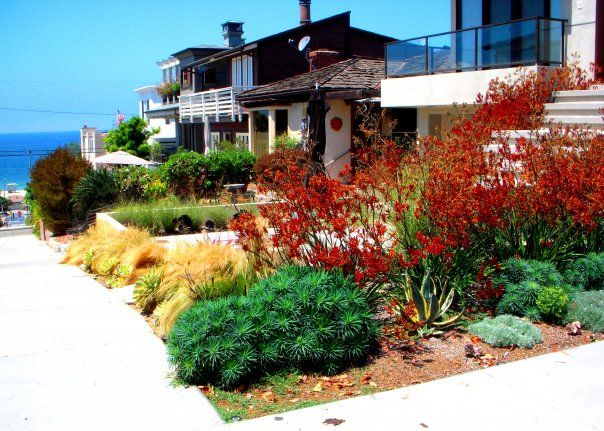 Native and or drought tolerant california plants for a for California native landscape design