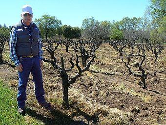 Work At The Vineyard Wine Jobs Job Vineyard