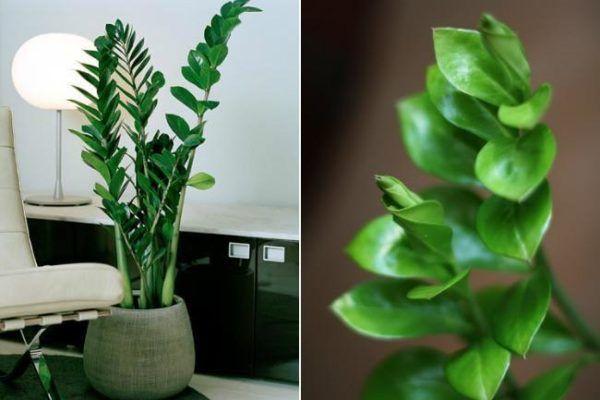 Plantas de interior para decorar la casa o la oficina comedor2 plantas de - Mejores plantas para interior ...