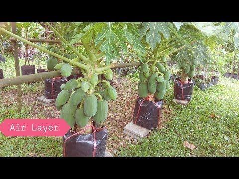 Youtube Ide Berkebun Kebun Sayur Tanaman