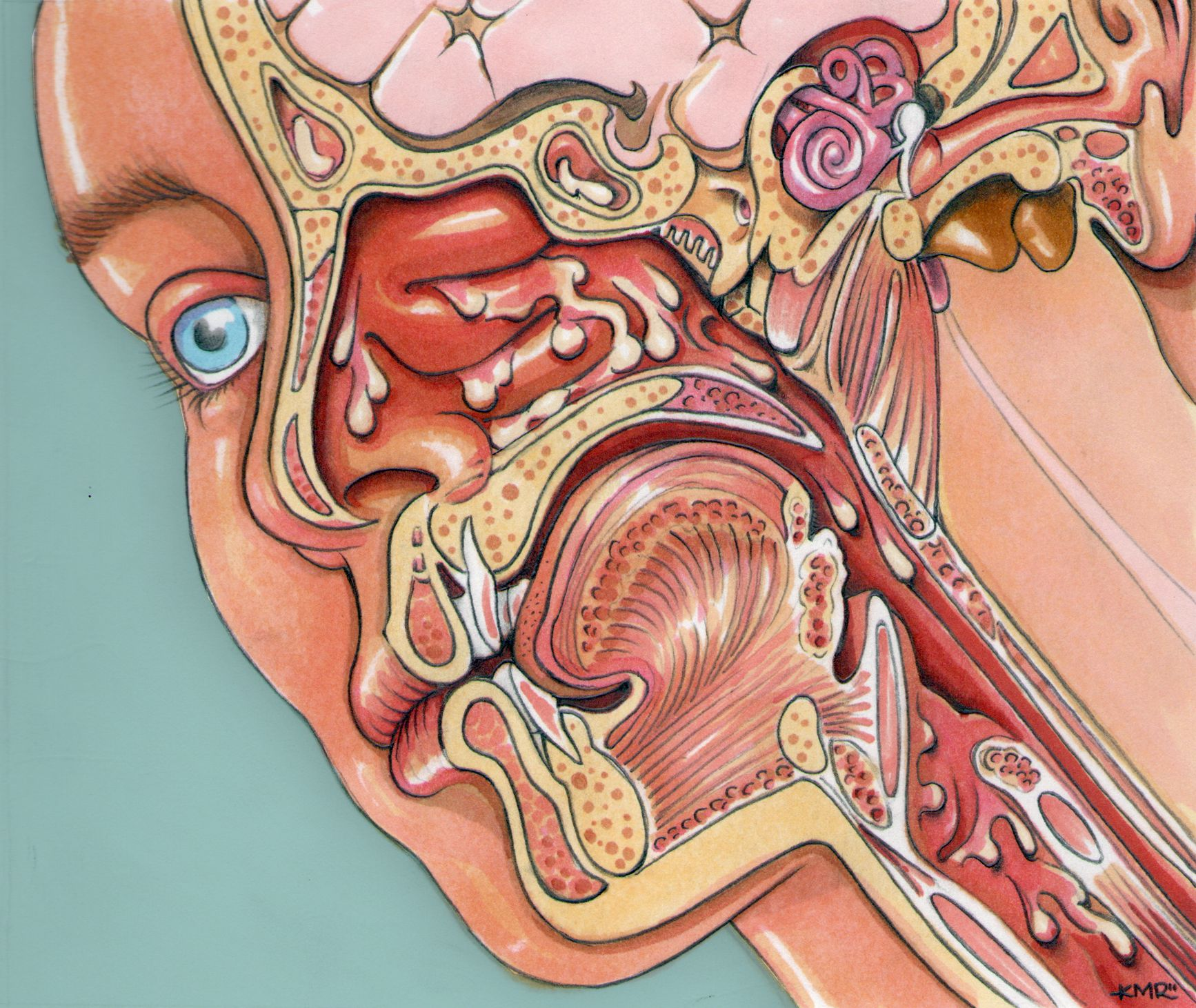 ear and nose diagram wiring diagrams bibpin by sweet curiosities on ent ears nose throat throat [ 1734 x 1461 Pixel ]
