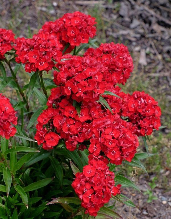Pin On Household Herb Garden