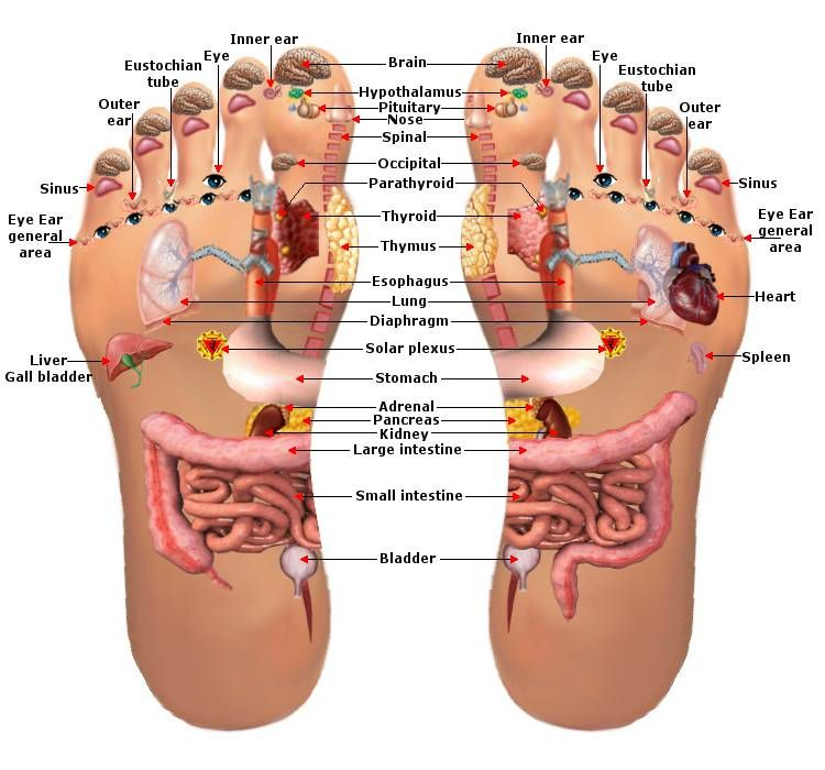 Reflexology Foot Chart - Planter Map | health and fitness ...