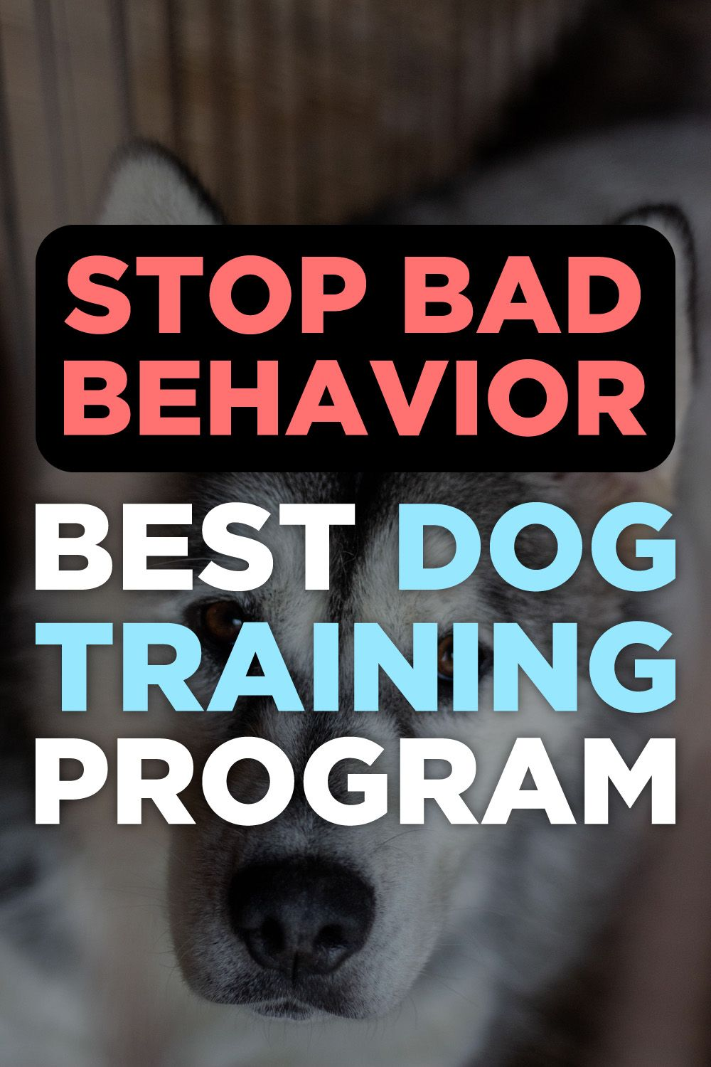 Brain Training For Dogs Review Dog training, Crate