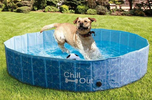 Top 10 Best Portable Foldable Dog Pools For Small Large Dogs Reviews In 2020 Dog Swimming Pools Dog Pool Dog Swimming