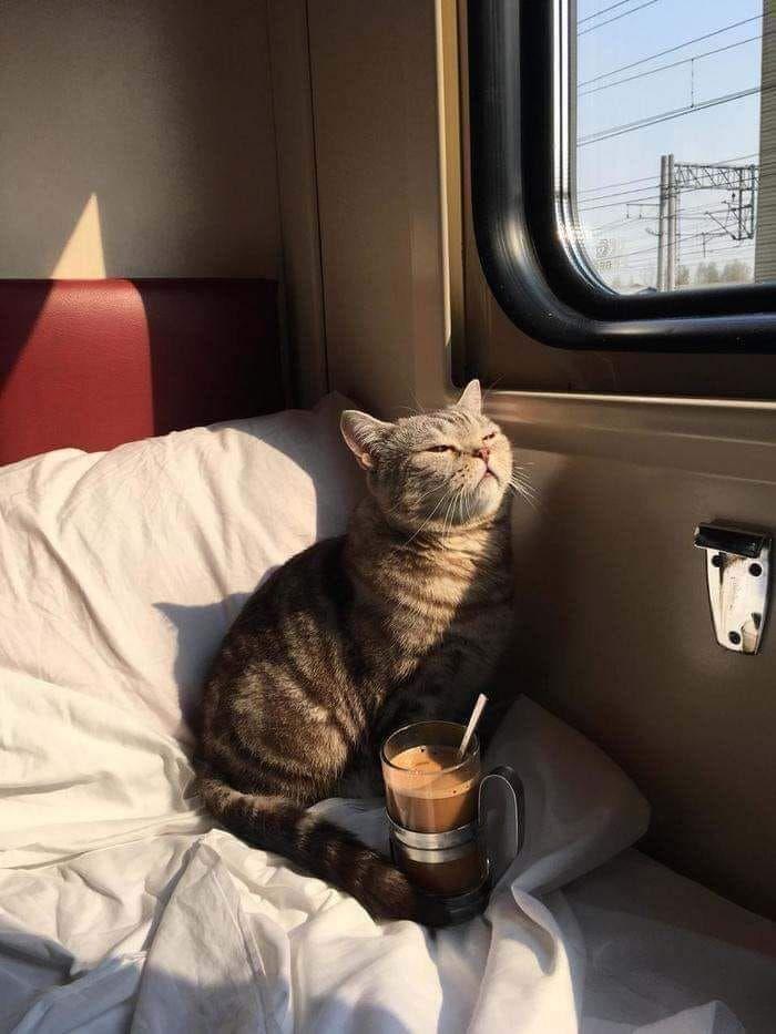 Espressività e curiosità dal pianeta Gatto #kittycats