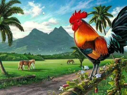 Coq de Porto Rico
