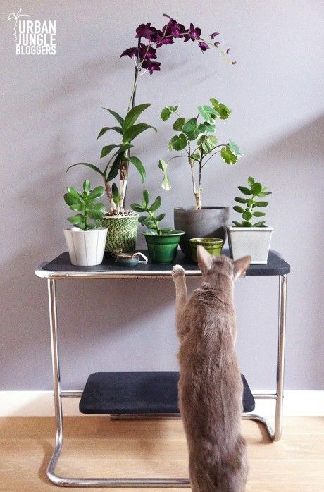 Urban Jungle Bloggers by Mouseblossom.nl #urbanjungle #greycat #succulents