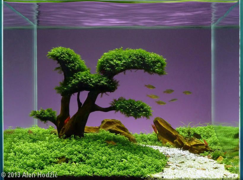 2013 AGA Aquascaping Contest   Entry #525