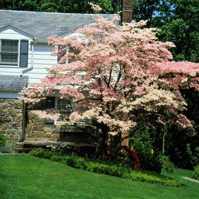 10 Best Flowering Trees and Shrubs for Adding Color to
