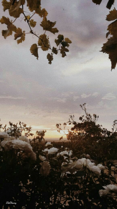 Lockscreen Tumblr Sky Aesthetic Aesthetic Backgrounds Flower
