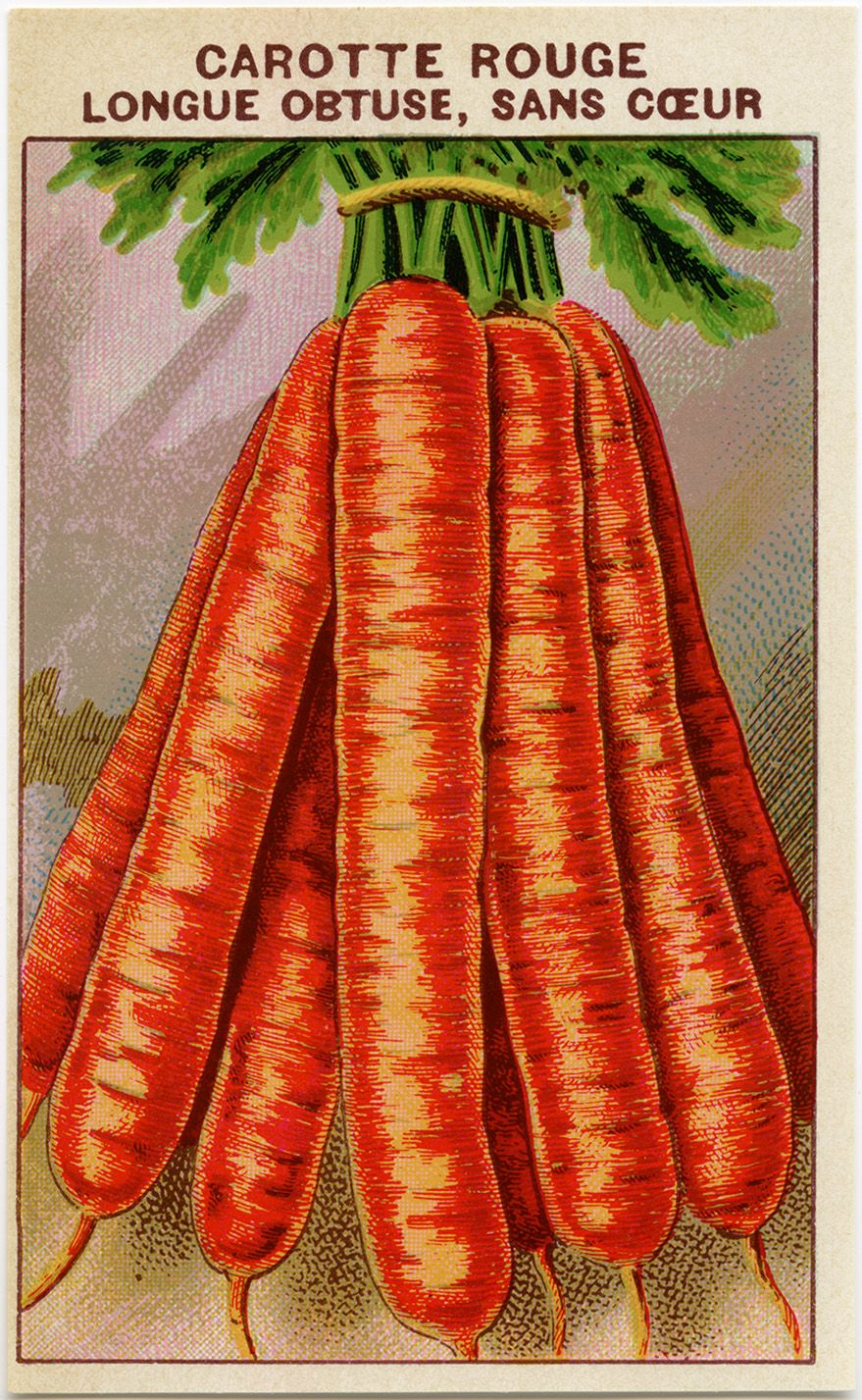 French seed packet, carrot clip art, old fashioned seed package, vintage garden…