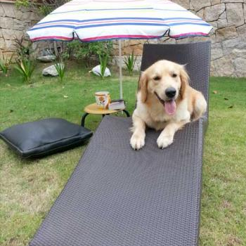 lounging on a lawn chair#OMGPuppies