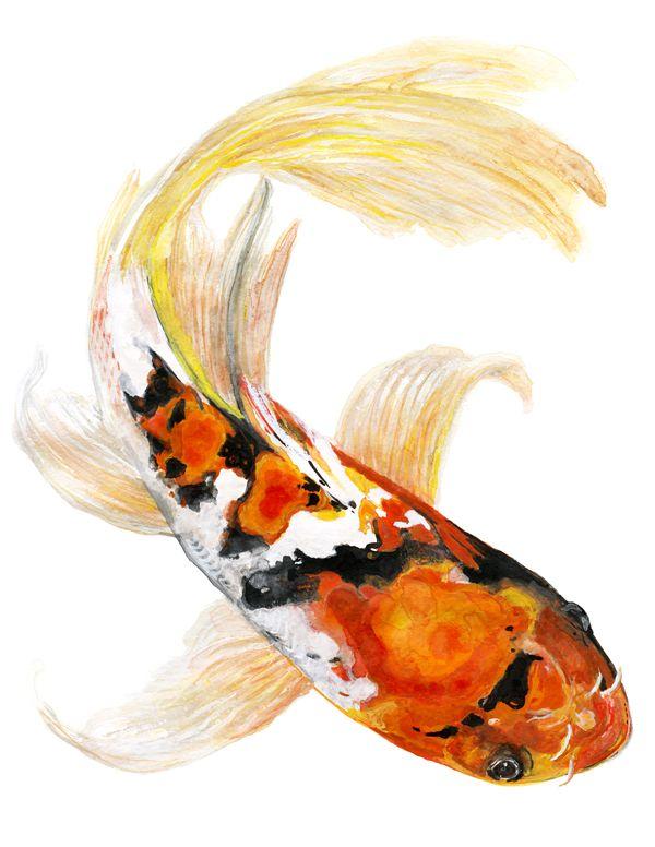 Butterfly koi fish watercolor painting for Koi carp artwork