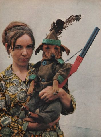 Dachshund Dog Wearing A Hunting Outfit From The 1960 S Dachshund