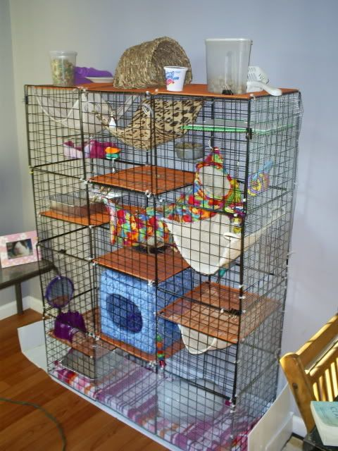 my rat cage rats items an creations pinterest furet. Black Bedroom Furniture Sets. Home Design Ideas