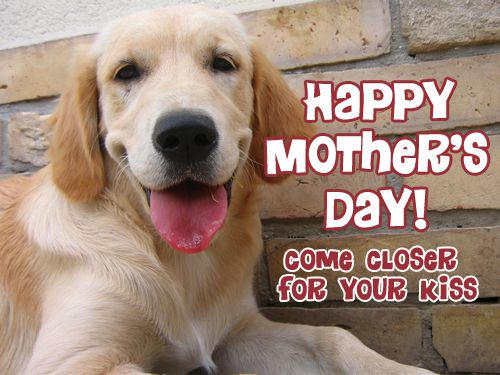 Happy Mother's Day to all the Golden Retrieve moms out there!