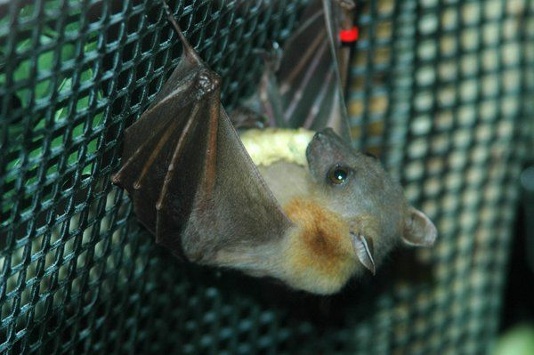 bat by photographer1969.deviantart.com on @DeviantArt