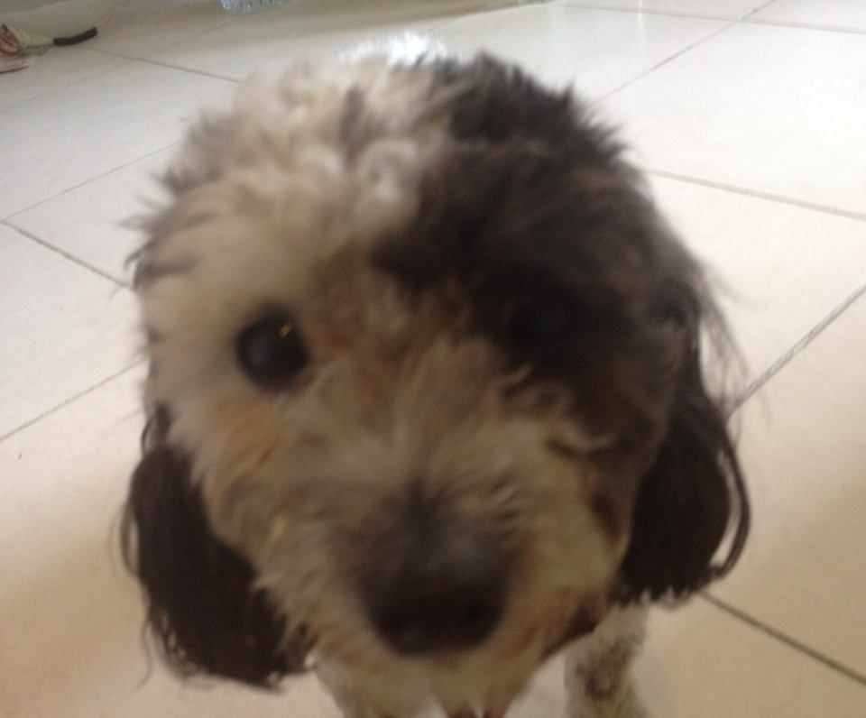 Found Dog Female Miami Fl Usa 33137 On October 12 2016 13