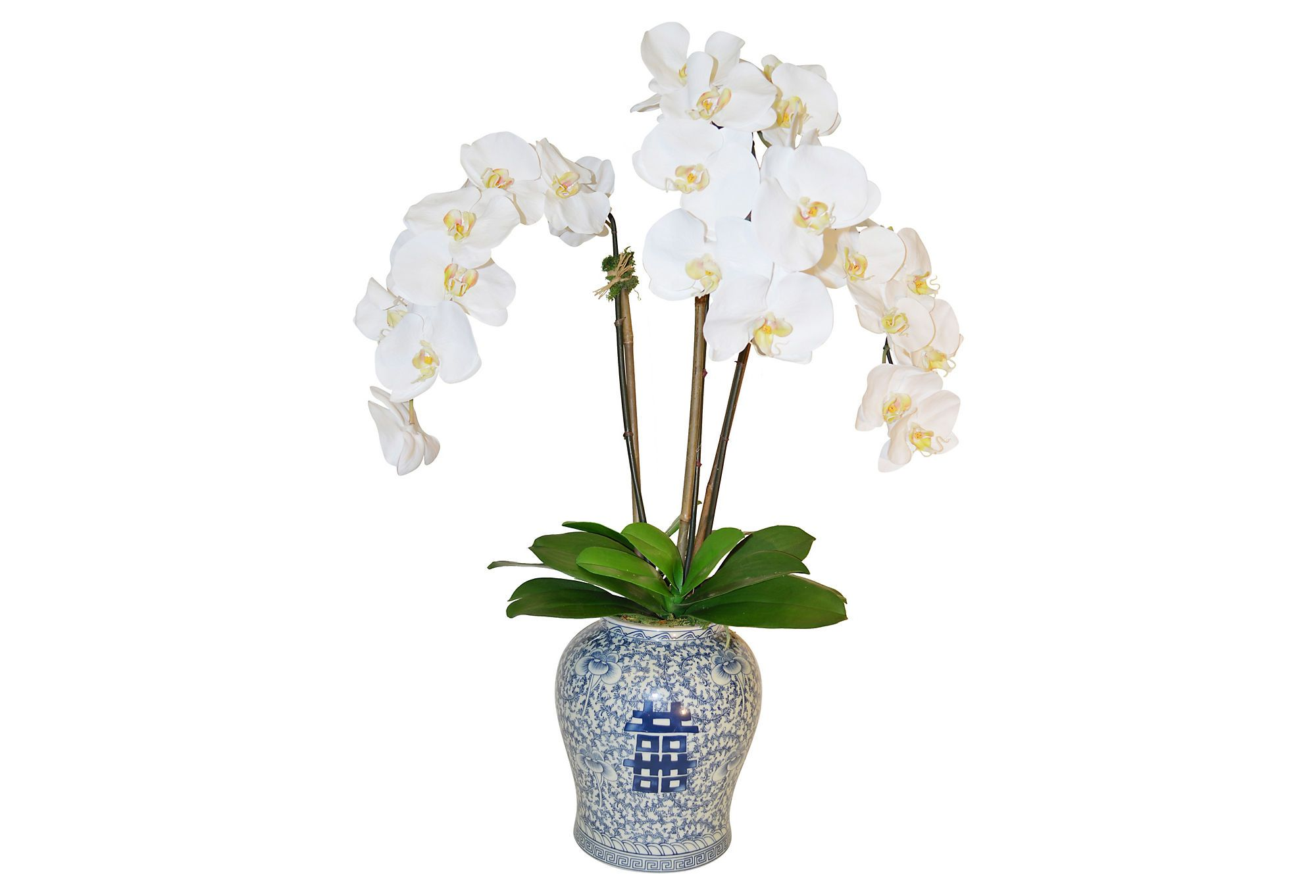 34 phalaenopsis in vase faux one kings lane orchids orchid reviewsmspy