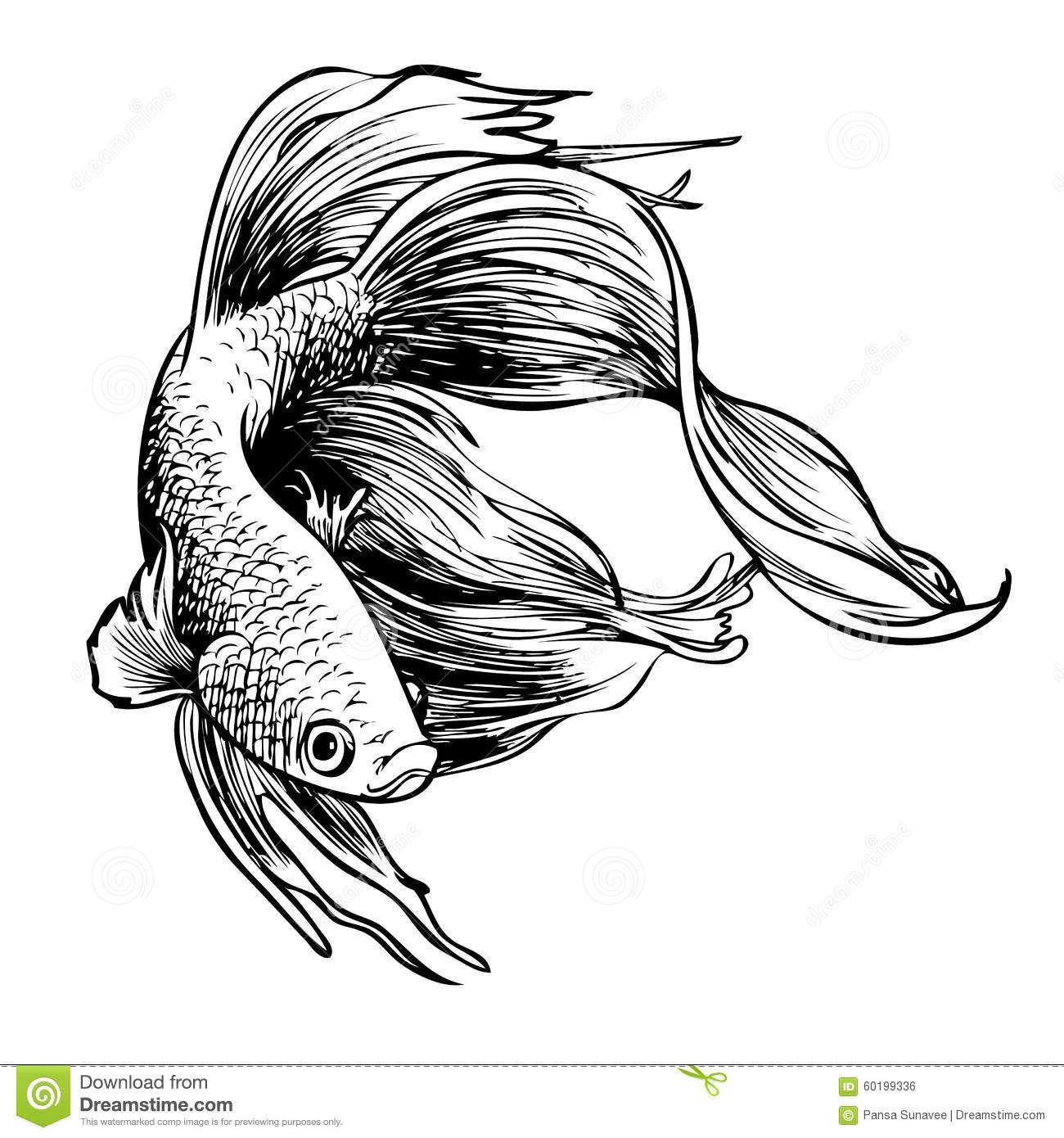 Hand Drawn Betta Fish Ahd Sketch Betta Fish Tattoo Fish Illustration Fish Sketch