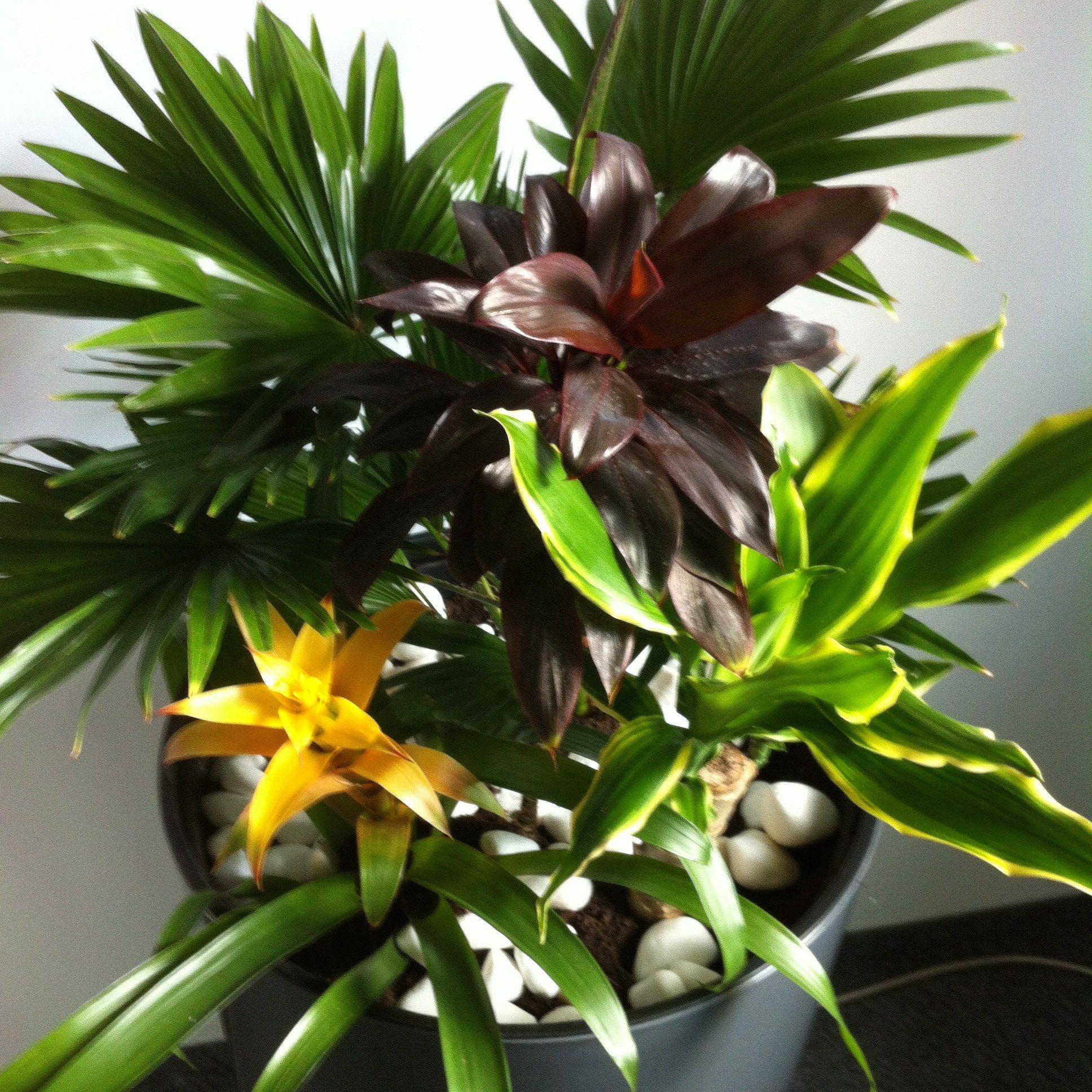 Kompozycje W Wysokich Donicach Plants Decor